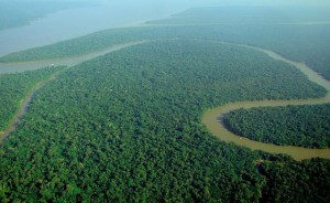 Aerial view of the Amazon rainforest (Wikipedia photo)