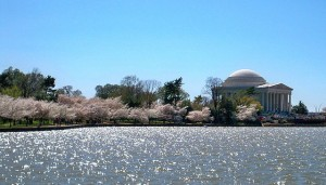 2010 National Cherry Blossom Festival (Wikipedia photo)