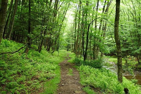 Seneca Hiking Trail by Forest Wonder/ CC BY-SA 3.0 US (Wikimedia)