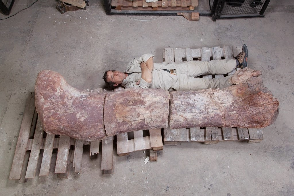 A member of the excavating team lies next to the femur of the recently unearthed titanosaur at the Egidio Feruglio Museum in Argentina's Patagonian city. (Photo: The Paleo King)