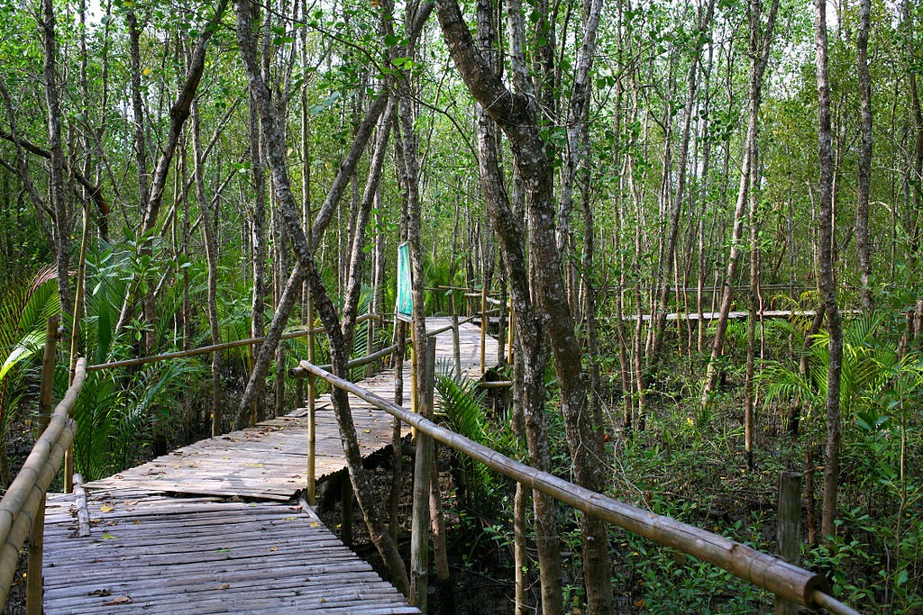 Bamboo bridge and Mangroves at Bakhawan Eco-park and Research Centre. Paolobon140 / Wikipedia photo