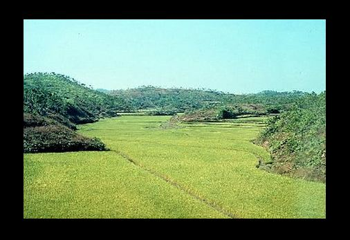 Malapatan rice fields. Andre Engels / Wikipedia photo