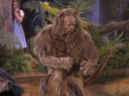 The costume for the Cowardly Lion in the 'Wizard of Oz' was made from real lion skins. TRF_Mr_Hyde / Flickr.