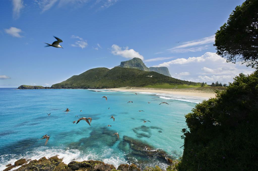 background-blinky-beach_Lord_Howe_Island_info