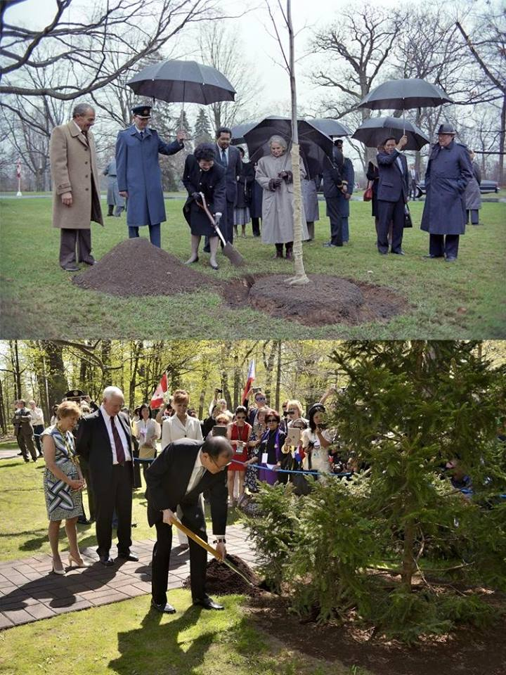 During the ceremonial tree planting in Canada, P-Noy planted a tree right next to his late mother President Corazon Aquino's tree (top photo) who visited Canada back in 1989. (Photo by: @RideauHall via PNoy's Facebook page)