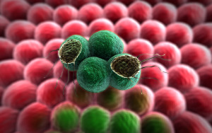 File: The tablets, Palbociblib, Ribociclib and Abemaciclib, work differently from hormone treatments currently used by deactivating the process that allows cancer cells to grow uninhibited. (ShutterStock )