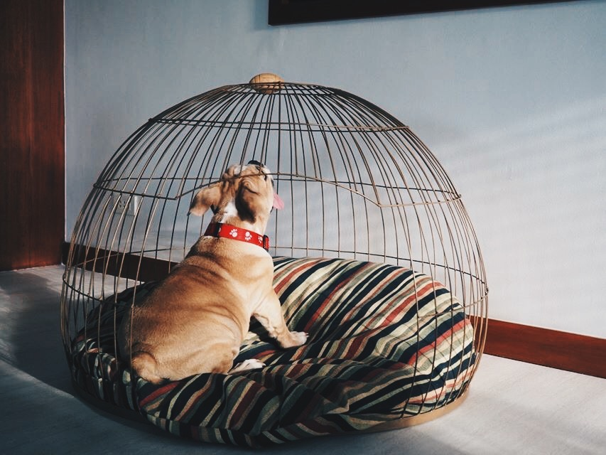 #AmbassadogPH: This adorable fella is enjoying his new Dome Home from Bow House.