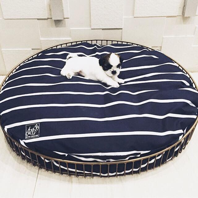 #AmbassadogPH: Even tiny dogs need space. This little guy is loving all the space with the Bowsket from Bow House.