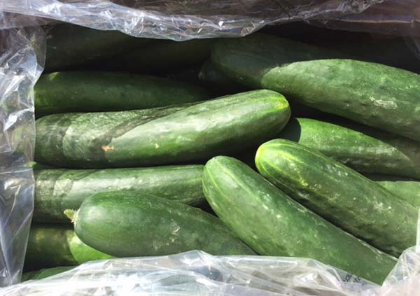 Product photo of recalled cucumber (Photo from the Canadian Food Inspection Agency)