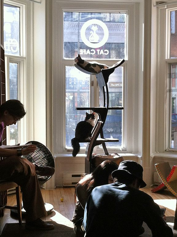 Le Cafe des Chats in Montreal, the Canadian cat cafe (Photo from Catfe's official Facebook page)