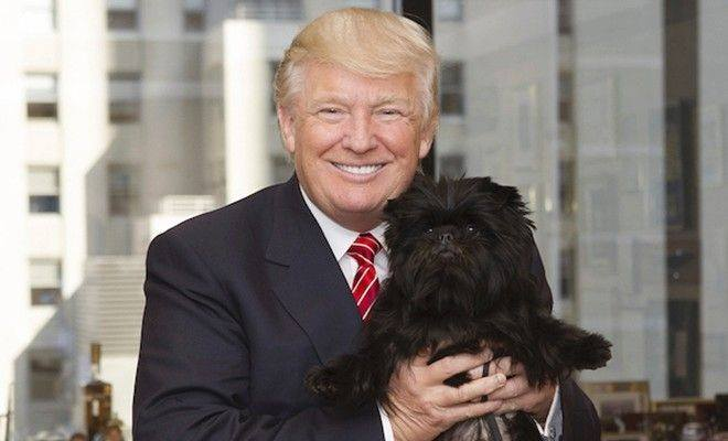 For years, the champion at the Westminster dog show was treated to quite a victory lap: Visit the morning TV shows. Up the Empire State Building. Lunch at Sardi's. Bark on a Broadway stage. (Photo: Donald Trump/Facebook)