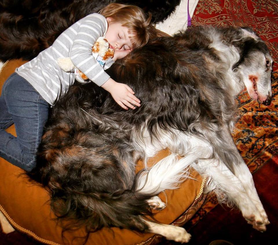 Watching little Raina McCloskey romp around the Westminster dog show ring with her borzoi buddy, it was hard to tell who was leading whom. (Photo: Aristide Economopoulos/Facebook)