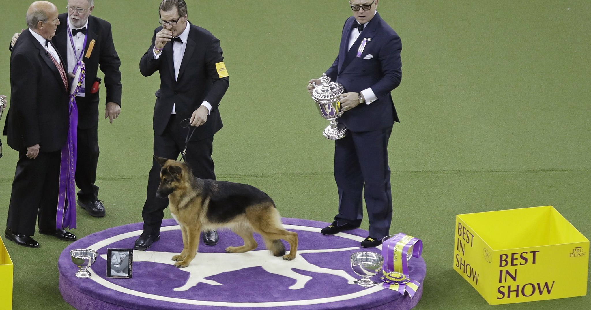 Rumour was crowned America's top dog Tuesday night when, a year after a near miss, she came out of retirement to win best in show at the Westminster Kennel Club. (Photo: Doyle Industries/Facebook)