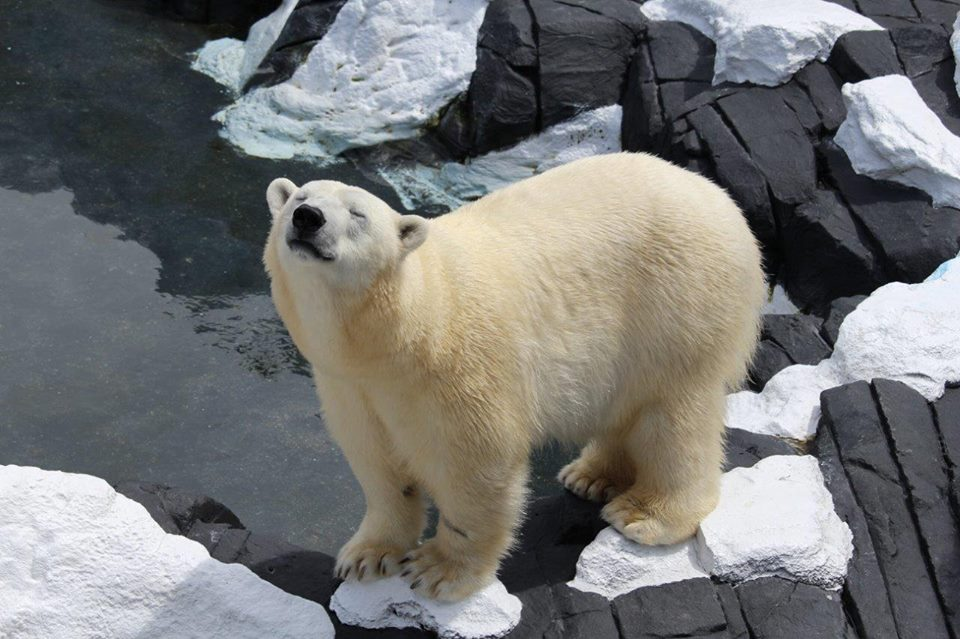 A beloved polar bear has died unexpectedly at SeaWorld in San Diego. (Photo: SeaWorld/Facebook)