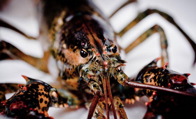 As a trade deal between the European Union and Canada nears completion, politicians in Maine want the federal government to find a way to prevent the U.S. from landing in a major trade disadvantage over a valuable, and tasty, resource –lobsters. (Photo: Tatiana Vdb/ Flickr)