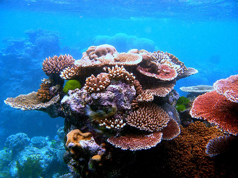 Continued coral bleaching along the almost 134,000-square-mile northeastern Australian reef, the result of rising water temperatures brought about by atmospheric and oceanic warming as a result of global climate change, now appears to be at the point where the coral will not be able to regrow, say scientists. (Photo: Toby Hudson/ Wikipedia)