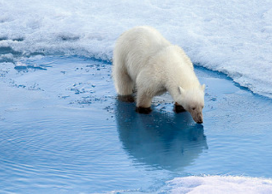 Polar bears and the Canadian monarch butterfly have been added to an international list of species and subspecies that are at risk of disappearing entirely from the planet. (Photo: Christopher Michel/Flickr)