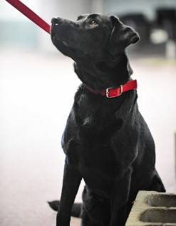 Changes are coming to open up the training of service dogs in Alberta. (Photo: State Farm/Flickr)