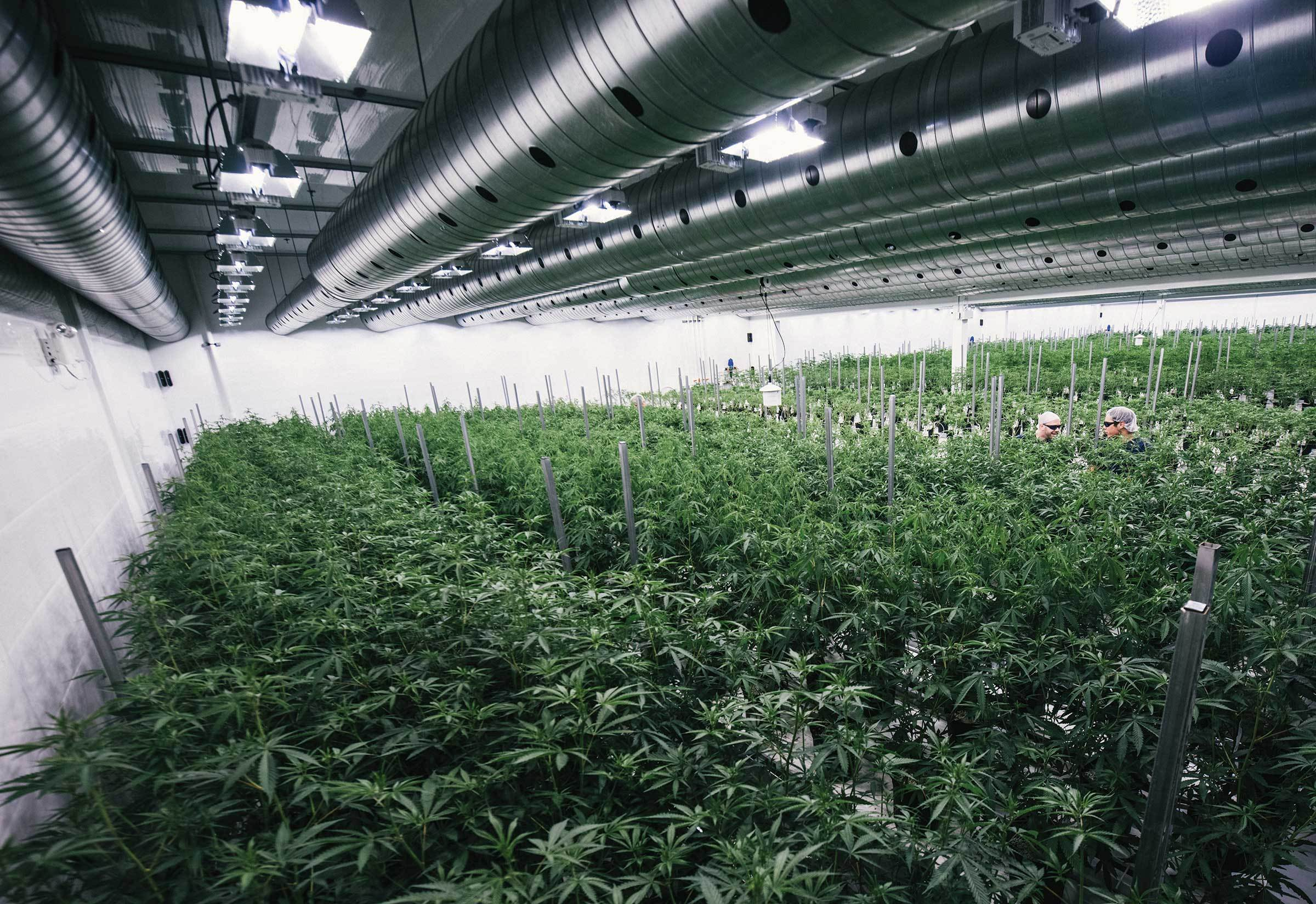 Canopy Growth (TSX:WEED) says it will retain 40 per cent of Agripharm and the rest will be owned by Green House Holdings North America Inc. and its affiliate in the Netherlands, which does business as Organa Brands. (Photo: www.canopygrowth.com)