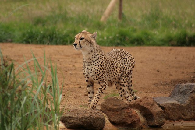 The owner of a vintage clothing store in San Francisco pleaded no contest Monday to misdemeanour charges she sold coats and other items made of cheetahs, leopards and other protected species. (Photo by Karen Roe/Flickr, CC BY 2.0)
