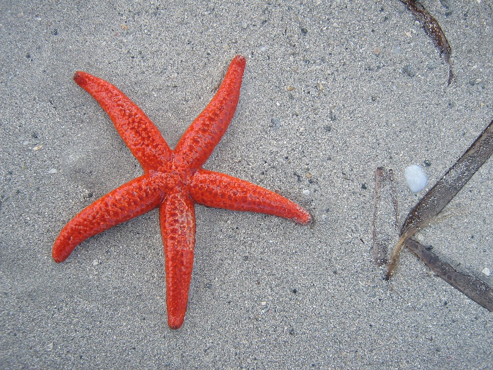 The starfish would develop lesions and then disintegrate, their arms turning into blobs of goo. (Pixabay photo)