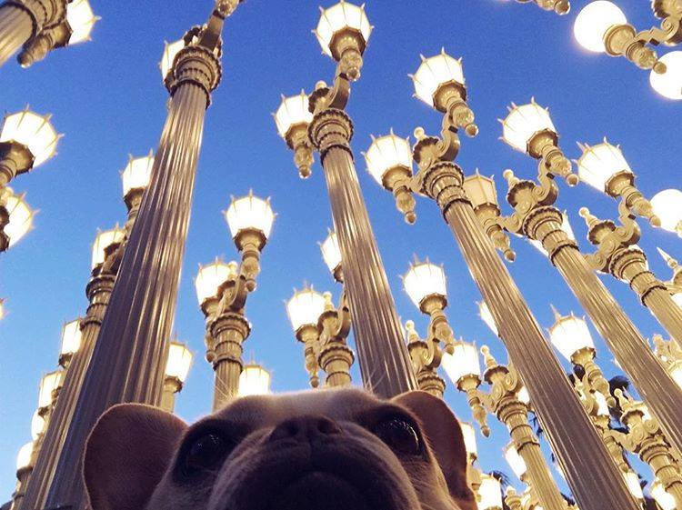 Artist Chris Burden's famous sculpture ``Urban Light'' is casting a new glow on the Los Angeles County Museum of Art. (Photo: LACMA Los Angeles County Museum of Art/Facebook)