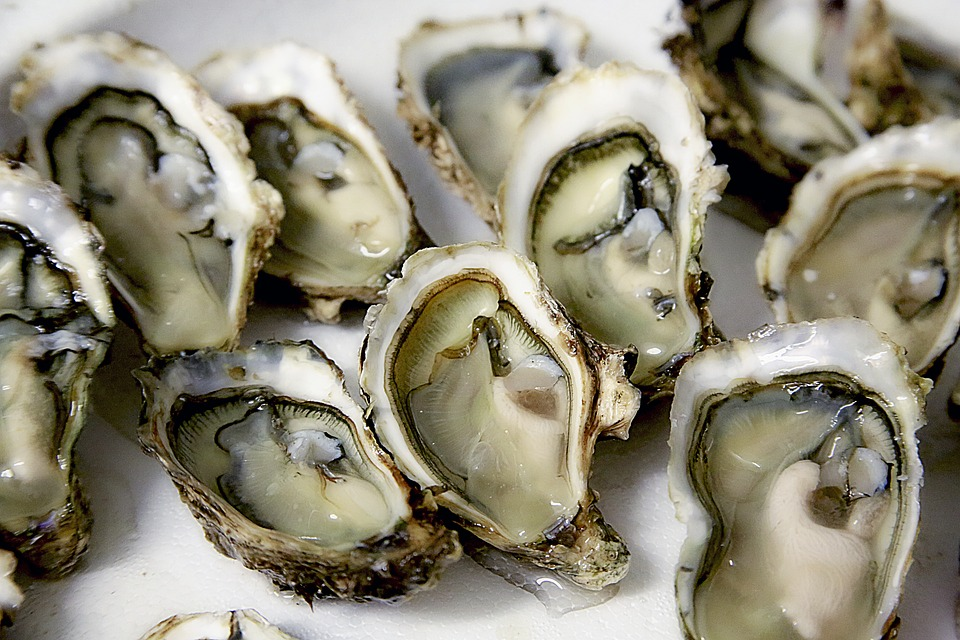 Long thought of as a cold water delicacy, edible oysters are being farmed in the warm waters of Fujairah, an emirate with a coastline that juts out into the Gulf of Oman. (Pixabay photo)